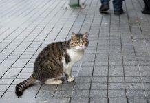 άχρηστη πληροφορία, Ρότερνταμ, γάτος,