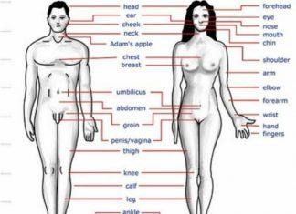 παράξενες, αλήθειες, ανθρώπινο σώμα,
