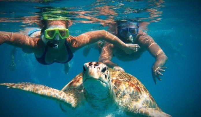 Ναύπλιο: Μία ακόμη θαλάσσια χελώνα νεκρή