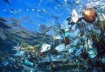 πλαστική σακούλα, θανατηφόρο, θαλάσσια ζωή,