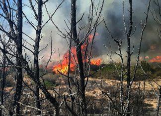 Εύβοια: Συνεχίζεται η μάχη για 2η μέρα στην περιοχή Πισσώνα - Επιχειρούν 52 πυροσβέστες