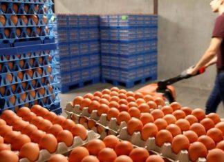 μολυσμένα, αυγά, Ευρώπη,