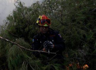 φώτο, πυροσβέστης, σώζει, πτηνό, Reuters,