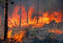 προτάσεις, Ν.Δ., αντιμετώπιση, πυρκαγιών,