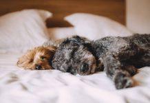 καλύτερος ύπνος, κατοικίδια,