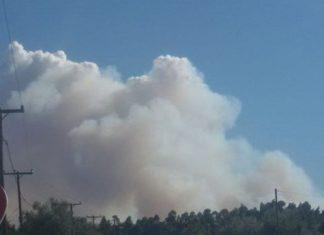 Σάμος: Φωτιά σε δασική έκταση