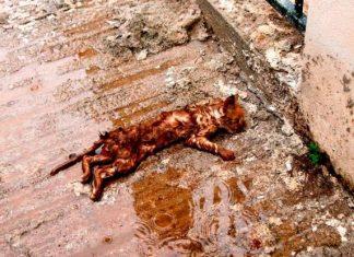 Μάνδρα Αττικής: Συγκλονίζει η φωτογραφία του Γ. Κέμμου με το πνιγμένο γατάκι