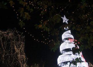 Αθήνα: Την Τρίτη 11 Δεκεμβρίου θα «ανάψει» το χριστουγεννιάτικο δέντρο στο Σύνταγμα