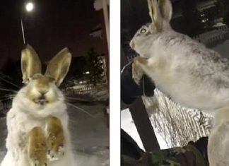 ΚΑΖΑΚΣΤΑΝ: Ζώα πάγωσαν ενώ έτρεχαν στους -57 βαθμούς Κελσίου