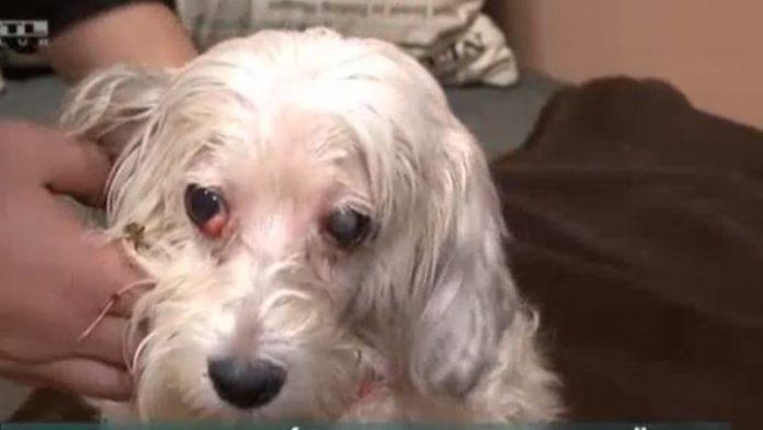 Αυτή η σκυλίτσα ήταν επί δύο εβδομάδες δίπλα στην νεκρή αφεντικίνα της