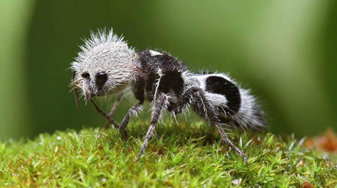 Μπορεί ένα μυρμήγκι να σκοτώσει μια αγελάδα; Κι όμως μπορεί!..