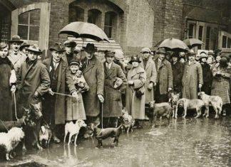 Βερολινέζοι περιμένουν να θανατώσουν τα σκυλιά τους, επειδή δεν μπορούν να πληρώσουν τον υψηλό φόρο σκύλου...