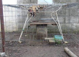 ΦΡΙΚΗ! Παγίδευσε γάτα σε κλουβί και τη χτύπησε με ψαροντούφεκο