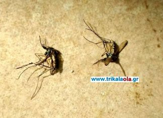 Τρίκαλα: Τεράστια κουνούπια, σπέρνουν τον φόβο