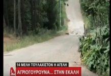 Το «Γαλατικό χωριό» - Εκάλη: Αγριογούρουνα περιφέρονται στους δρόμους
