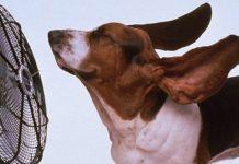 10 τρόποι να δροσιστείτε χωρίς κλιματιστικό