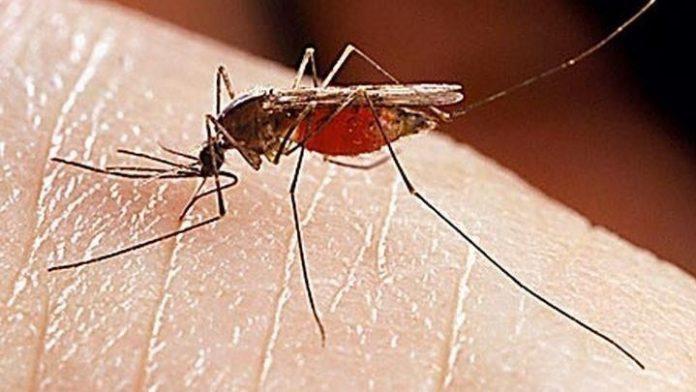 Στην Αττική το ένα από τα δέκα κρούσματα του ιού του Δυτικού Νείλου