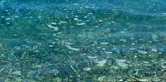 Τι είναι η «λαδίλα» στην επιφάνεια της θάλασσας - Μύθος η συσχέτιση αχινών-καθαρού νερού