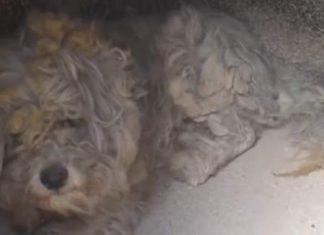 Βρήκε σπιτικό ο σκύλος που εντοπίστηκε ζωντανός σε φούρνο στο Μάτι