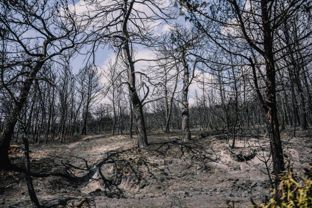 Φωτιά στο Μάτι: Ευθύνες στην ηγεσία της Πυροσβεστικής Υπηρεσίας προκύπτουν μετά από νέες καταθέσεις