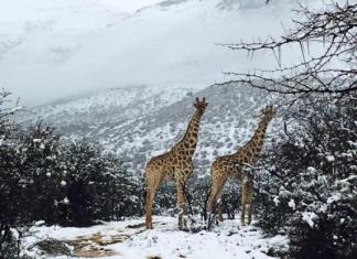 Νότια Αφρική: Ξαφνική χιονόπτωση
