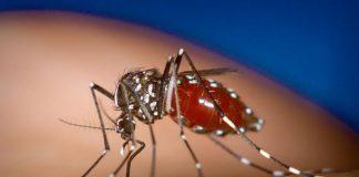 Λαμία: Κατέληξε 67χρονος με τον ιό του Δυτικού Νείλου