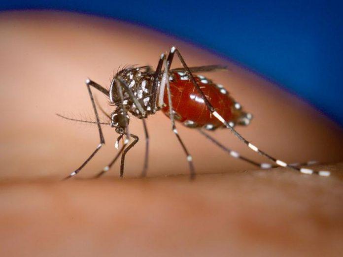 Δύο νεκροί από τον ιό του Δυτικού Νείλου στην Ελλάδα