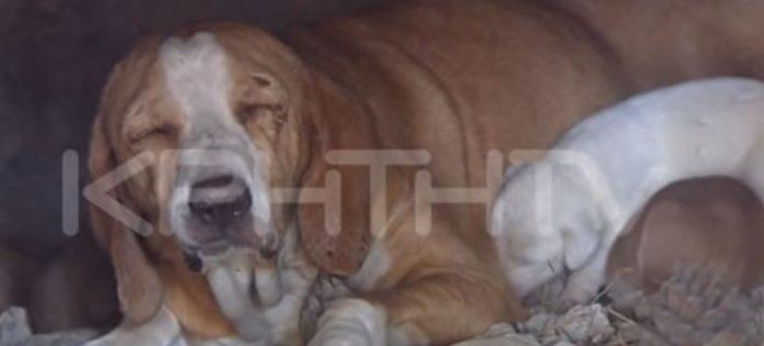 Κρήτη: Απίστευτη κτηνωδία - Έκλεισαν σε φούρνο σκυλίτσα μαζί με τα κουτάβια της και έβαλαν φωτιά