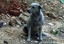 Ηράκλειο: Η βλακεία δεν έχει όρια - Έβαψαν σκυλί με μπλε μπογιά