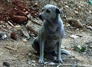 Βρήκε το χρώμα της η σκυλίτσα που είχαν βάψει μπλε