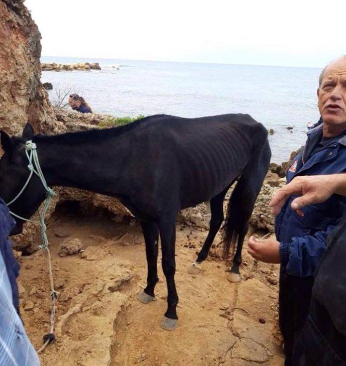 H απίστευτη ιστορία της Χάιδως - Το άλογο έπεσε στη θάλασσα και κολυμπούσε για 15 μέρες