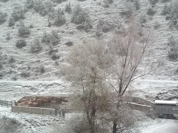 Έπεσαν τα πρώτα χιόνια στα ορεινά