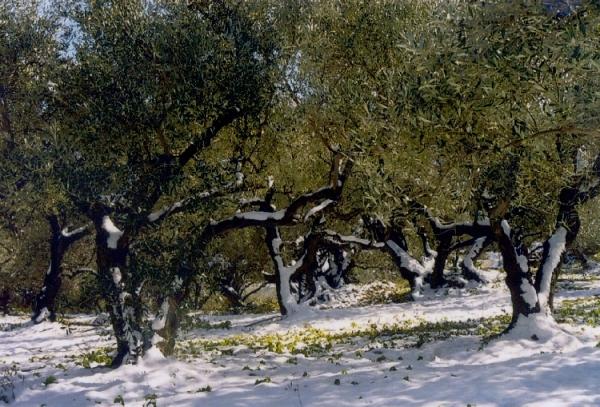 ΚΕΔΕ: Μοιρασμένες οι ευθύνες για το κόψιμο των δέντρων