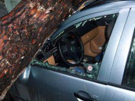 Έπεσε δέντρο από τον αέρα και καταπλάκωσε 12 οχήματα