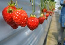 Δήμος Αγρινίου: Δωρεάν διάθεση φρούτων