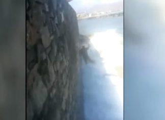 Κρήτη: Απίστευτη αγριότητα - Πέταξαν σκυλάκι στην θάλασσα