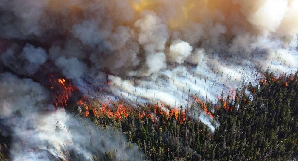 Παγκόσμιος συναγερμός! Καταστρέφεται ο Αμαζόνιος - Αποτεφρώνονται τεράστιες εκτάσεις