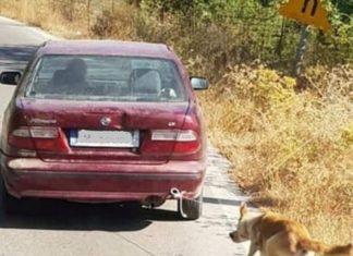 Βρέθηκε το αυτοκίνητο που είχαν δέσει σκύλο και τον έσερναν