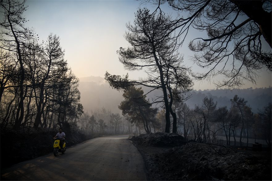 Εύβοια: «Μαύρο» το δάσος Natura που κάηκε