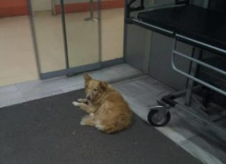 Βόλος: Σκυλίτσα «Χάτσικο» περιμένει πέντε χρόνια το αφεντικό της που πέθανε