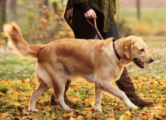 ΠΡΟΣΟΧΗ! Οι κτηνίατροι προειδοποιούν: Ούτε απολυμαντικά, ούτε υδροαλκοολικά τζελ για σκύλους και γάτες