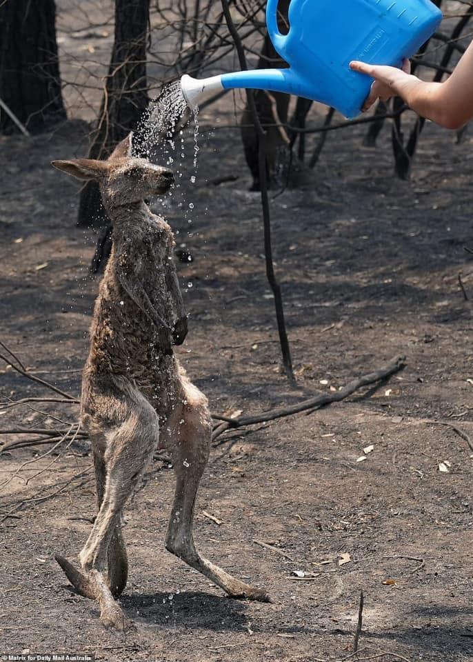 ΑΥΣΤΡΑΛΙΑ: «Κόλαση» - Νεκροί 23 άνθρωποι και μισό δισ. ζώα