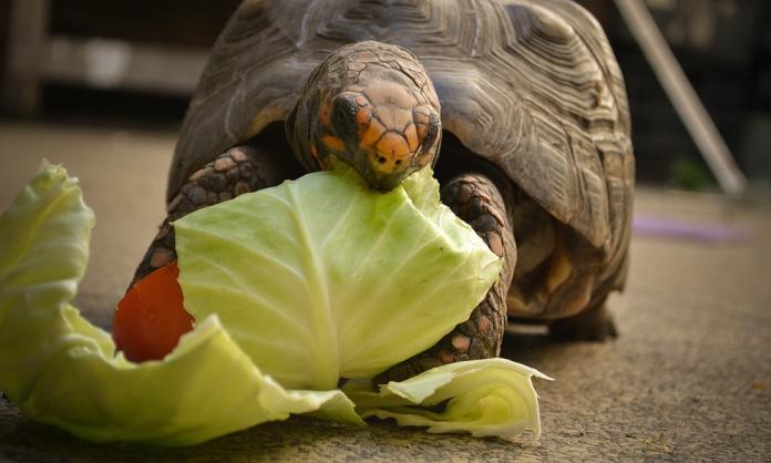 ΙΤΑΛΙΑ-Covid-19: Πρόστιμο 400 ευρώ σε 60χρονη στη Ρώμη που έβγαλε βόλτα τη… χελώνα της