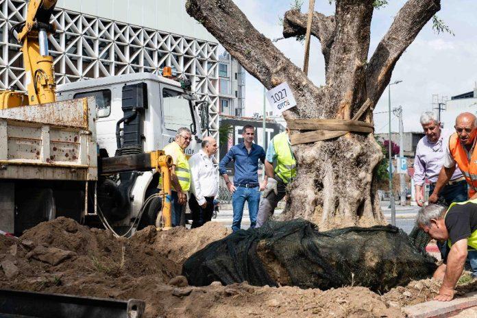 Δήμος Αθηναίων: Αιωνόβιες ελιές στην Ιερά οδό για την Παγκόσμια Ημέρα Περιβάλλοντος