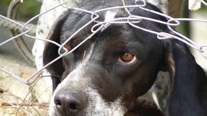 Βορίδης: Σε κακούργημα μετατρέπεται το αδίκημα βασανισμού των ζώων