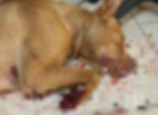 Σε διαθεσιμότητα ο υπάλληλος της ΔΕΗ που κακοποίησε φρικτά τον σκύλο του