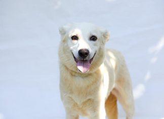 Δήμος Αθηναίων: Ιστοσελίδα για όσους νοιάζονται για τους σκύλους και τις γάτες της πόλης