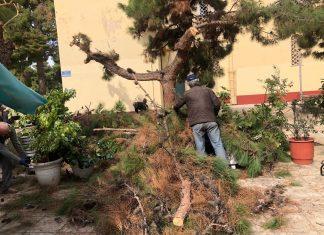 Δήμος Αθηναίων: Απομάκρυνε πεσμένα δένδρα